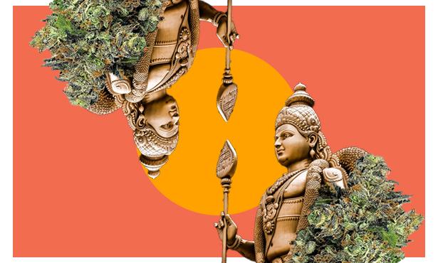 Hindu Kush Strain Information