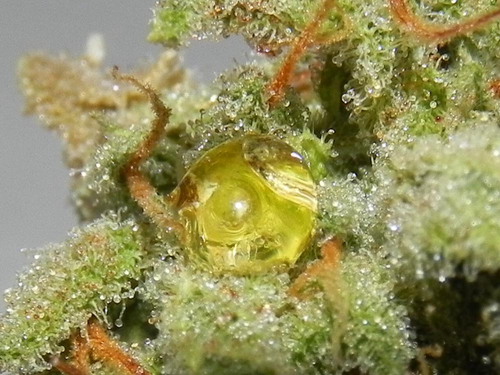 Sap Bubbles on a Pot Plant: Explained